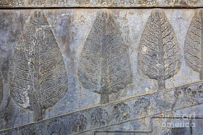 Ancient Persia Photograph - Bas Reliefs Depicting Cedar Trees At Persepolis In Iran by Robert Preston