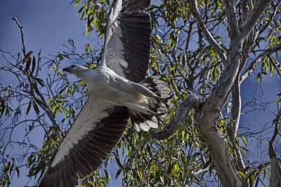 Eagle Photograph - Base Jumper V2 by Douglas Barnard