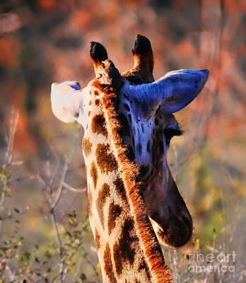 Photograph - Bashful Giraffe  by Alexandra Jordankova