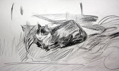 Drawing - Bashful Pencil Study by Anita Dale Livaditis