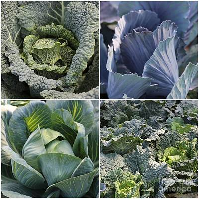 Food Photograph - Basic Greens Collage by Carol Groenen