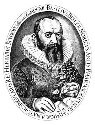 Ruff Drawing - Basilius Besler (1561-1629) by Granger