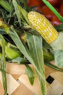 Sweet Corn Farm Photograph - Basket Farmers Market Corn by Carolyn Marshall