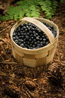 Large Group Of Objects Photograph - Basket Full Of Bilberries by Aberration Films Ltd