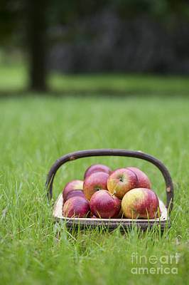 Basket Of Apples Art Print by Tim Gainey