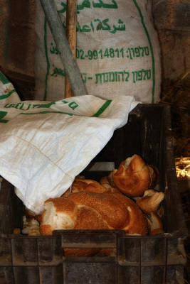 Photograph - Fresh Challah Bread Art Prints by Doc Braham