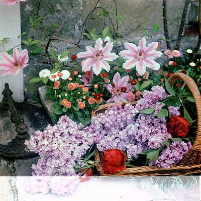 Still Life Photograph - Basket Of Flowers At Reddish House by Cecil Beaton
