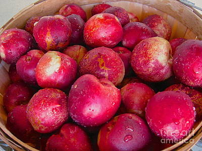 Photograph - Basket Of Plums by Suzanne Oesterling