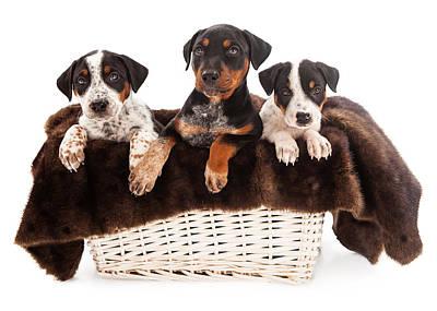 Basket Of Rottweiler Mixed Breed Puppies Art Print