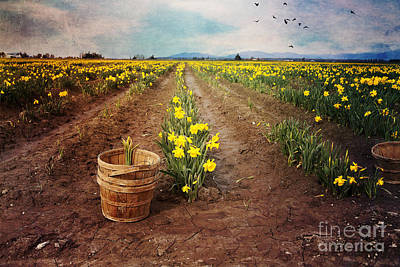Print featuring the photograph basket with Daffodils by Sylvia Cook