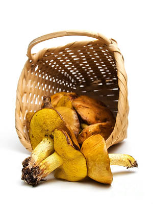 Cep Photograph - Basket With Mushrooms by Sinisa Botas