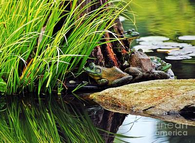 Photograph - Basking Bullfrogs by Angela Murray