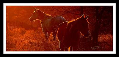 Wall Art - Photograph - Basking In The Sunset Glow by Shannon Story