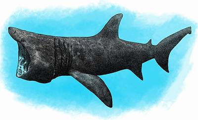 Photograph - Basking Shark, Illustration by Roger Hall