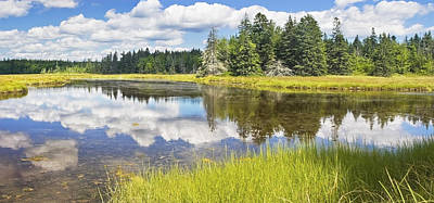 Photograph - Bass Harbor Marsh - Summer - Acadia National Park - Maine by Keith Webber Jr