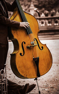 Photograph - Bass Musician by Phil Cardamone