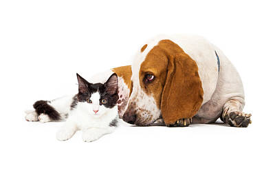 Basset Hound Dog And Kitten Print by Susan Schmitz