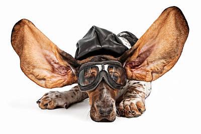 Basset Hound Dog Aviator Art Print