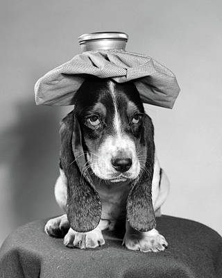 Bassett Hound Dog With Ice Pack On Head Art Print