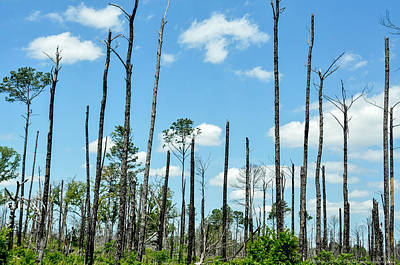 Photograph - Bastrop Destruction 3 by Teresa Blanton