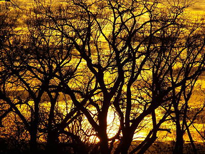 Photograph - Bastrop Sunset by James Granberry