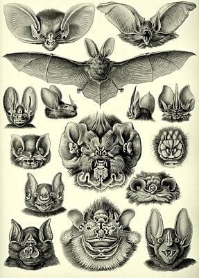 Painted Bat Drawing - Bat Bats Haeckel Chiroptera Mammals Microchiroptera by Movie Poster Prints