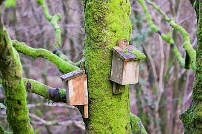 Bat Photograph - Bat Boxes In The Forest Of Bowland by Ashley Cooper