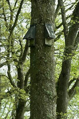 Exmoor Photograph - Bat Boxes On Trees by David Aubrey