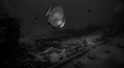Nighttime Street Photography - Batfish over Sabang Wreck Sabang Wreck In Black And White by Colin Utz