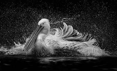 Pelican Wall Art - Photograph - Bath by C.s. Tjandra