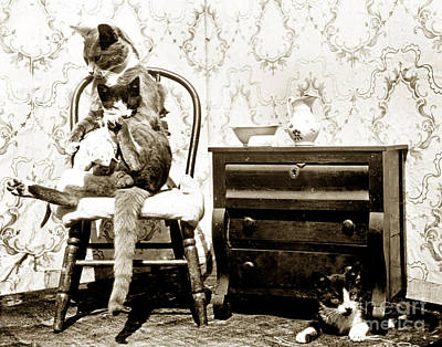Print featuring the photograph Bath Time For Kitty Circa 1900 Historical Photos by California Views Mr Pat Hathaway Archives