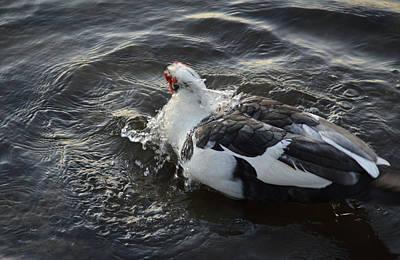 Photograph - Bathing Duck 1 by RD Erickson