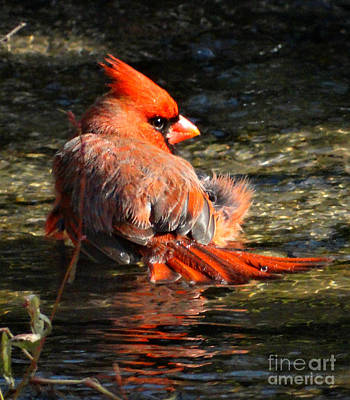 Photograph - Bathing by Scott B Bennett