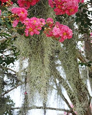 Photograph - Baton Rouge Louisiana Moss And Crepe Myrtle by Lizi Beard-Ward