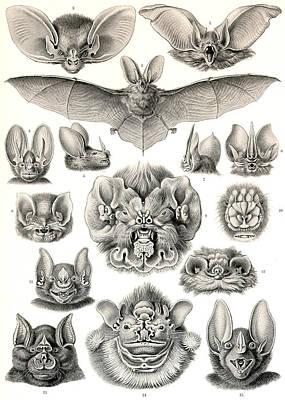 Fox Digital Art - Bats Bats And More Bats by Unknown