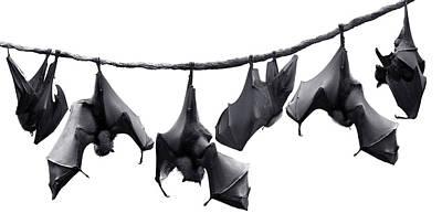 Bats Hangin' Out II Art Print