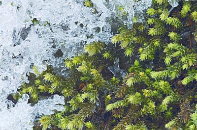 Photograph - Battle Between Seasons by Jim Zablotny