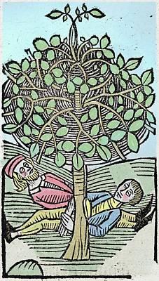 Bausor Tree Art Print