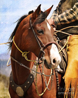 Working Cowboy Photograph - Bay At Branding by Susie Fisher