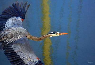 In Flight Photograph - Bay Blue Heron Flight by Robert Bynum