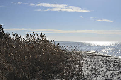 Island Beach State Park Photograph - Bay Breeze In Winter by Terry DeLuco
