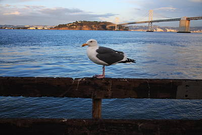 Photograph - Bay Bridge Seagull by Aidan Moran