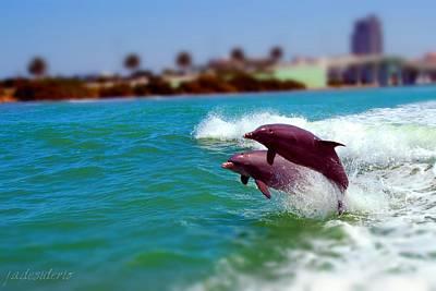 Bay Dolphins Art Print