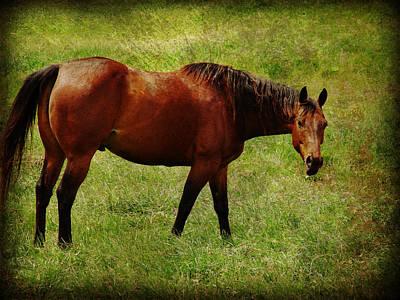 Equine Digital Art - Bay Horse by Cassie Peters