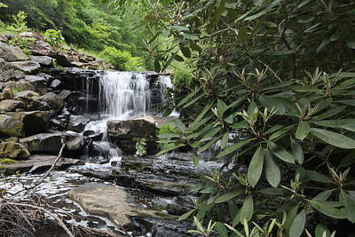 Photograph - Bay Laurel At Goose Creek Waterfall by Robert Camp