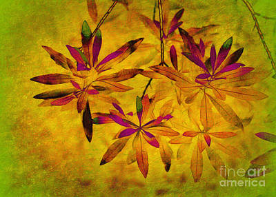 Photograph - Bay Leaves by Judi Bagwell