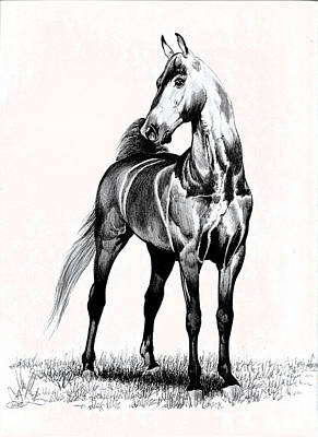 Horse Drawings Drawing - Designed - Bay Saddlebred by Cheryl Poland
