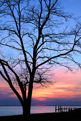 Photograph - Bay Sunset by Carolyn Derstine