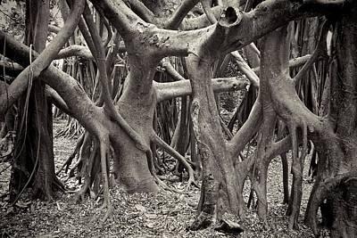 Banian Photograph - Baynan Roots by Rudy Umans