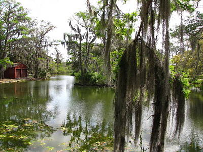 Art Print featuring the photograph Bayou by Beth Vincent